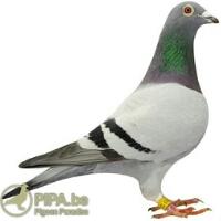 http://www.irpipa.ir/imgarticle/1503748974696.png