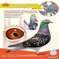 http://www.irpipa.ir/imgarticle/1506639184069.png