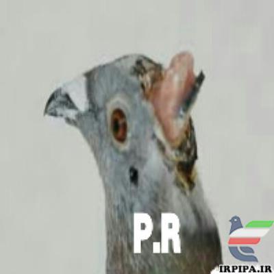 http://www.irpipa.ir/imgarticle/86400000360000010006464.png